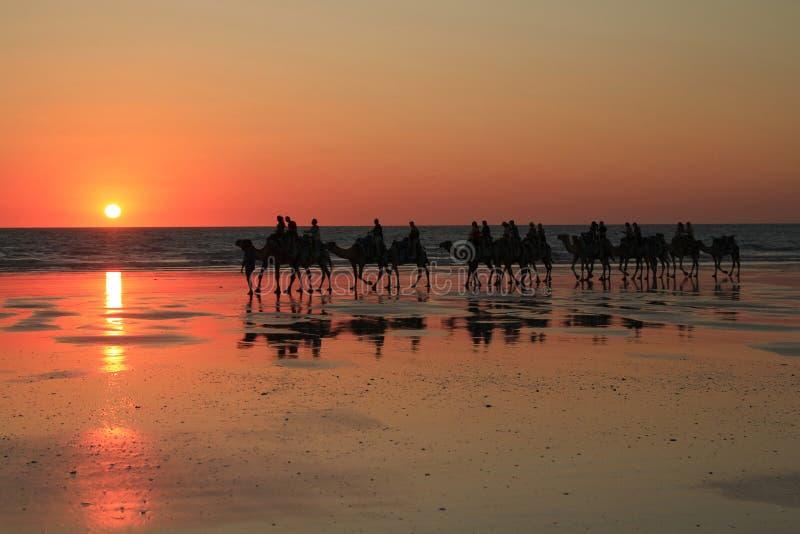 Kamelen op kabelstrand stock afbeeldingen