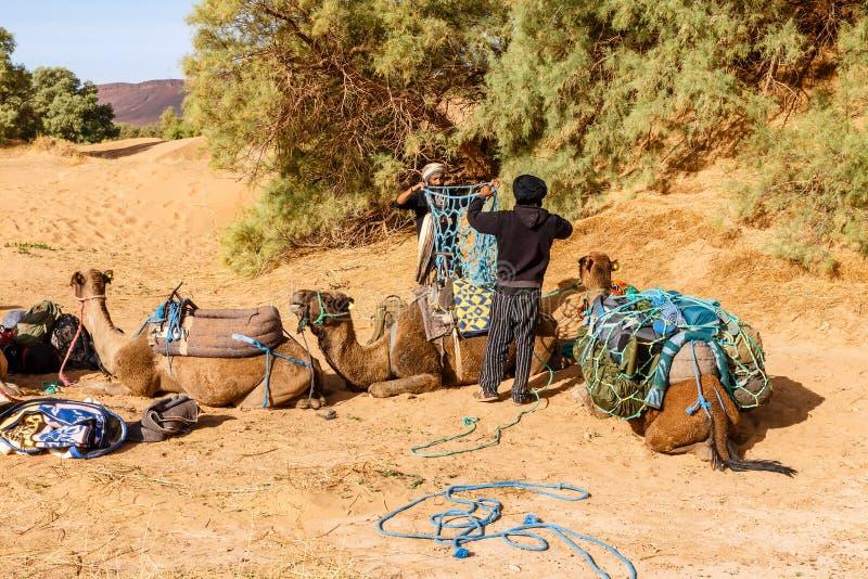 Kamelen in Sahara Desert, Marokko stock fotografie