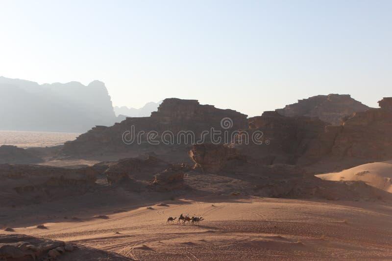 Kamelen in Wadi Rum stock foto's