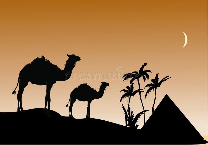 Kamelen in woestijn royalty-vrije illustratie