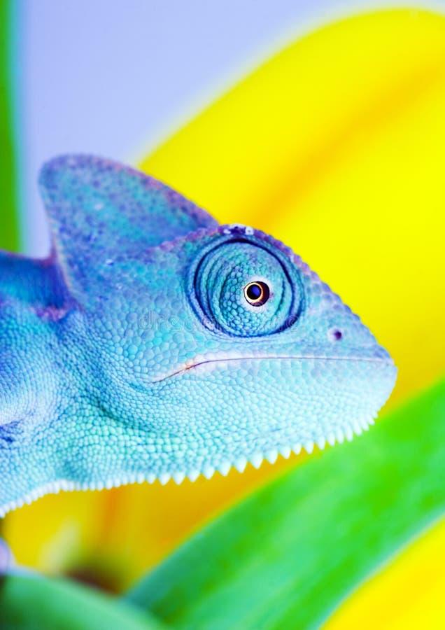 Kameleon op tulp royalty-vrije stock afbeelding