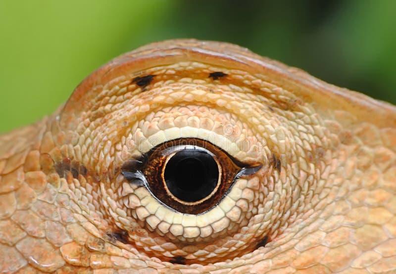 Kameleongoud royalty-vrije stock foto