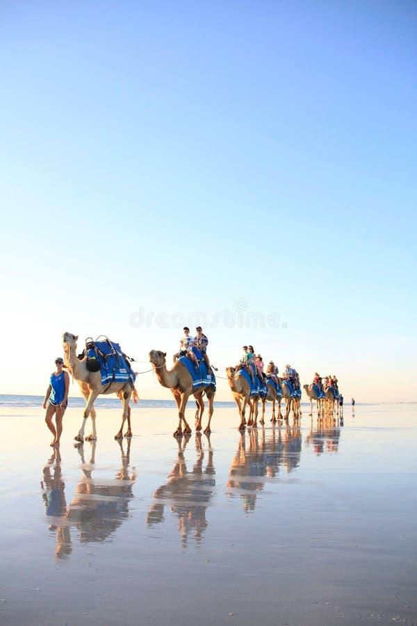 Kamelfahrten auf Strand stockbild