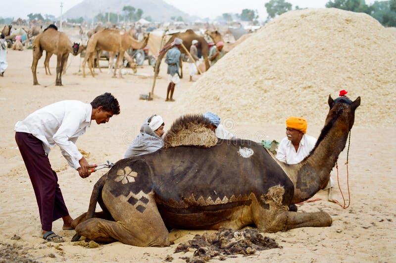 Kamel-Dekoration, Pushkar Indien lizenzfreie stockbilder