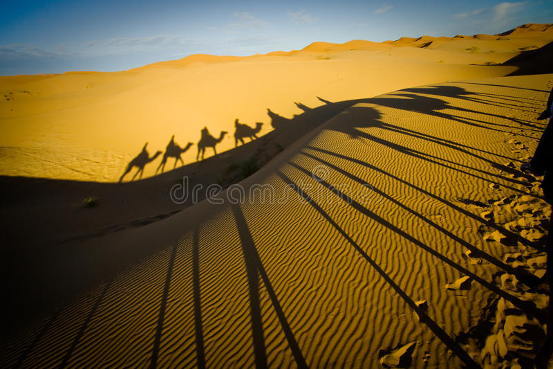 kamelhusvagnöken sahara