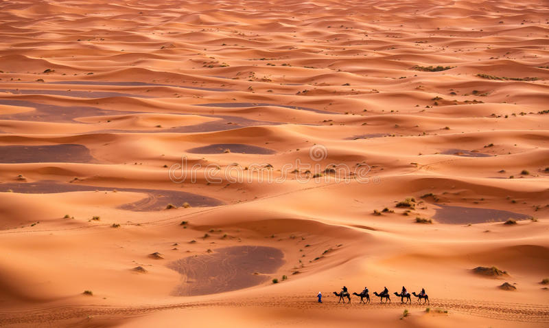 Kamelhusvagn i Sahara Desert fotografering för bildbyråer