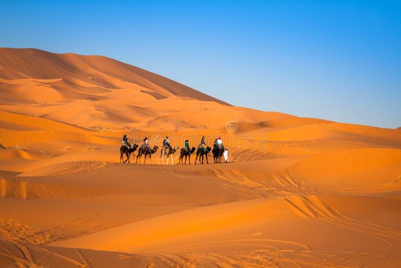 Kamelhusvagn som går till och med sanddyerna i Sahara Desert, arkivfoton
