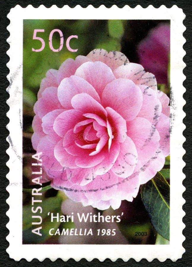 Kameliowi Kwiatonośnej rośliny australijczyka znaczki pocztowi obrazy stock