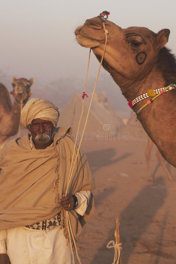 kamelman royaltyfri fotografi