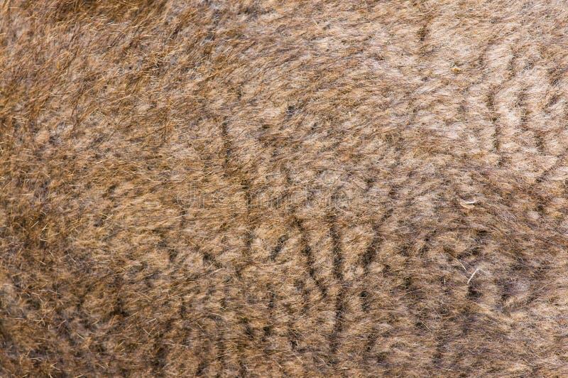 Kamelpelz stockbilder