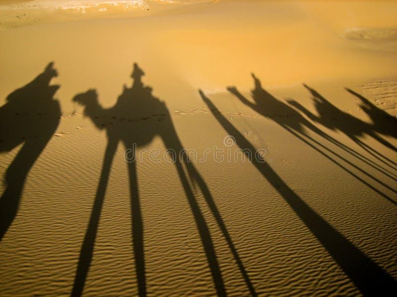 Kamelreflexion auf dem Sand bei Sonnenuntergang, Sahara Desert, Marokko stockfoto
