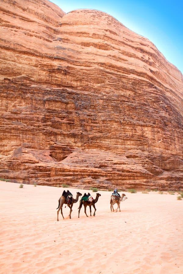 Kamelreise durch siq Um Tawaqi, Wadi-Rum, Jordanien lizenzfreie stockbilder