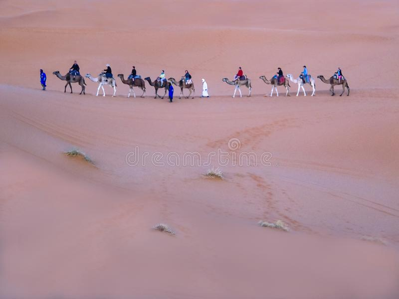Kamelreiten des Touristenwohnwagens auf Sanddüne in Sahara-Wüste, lizenzfreie stockfotografie