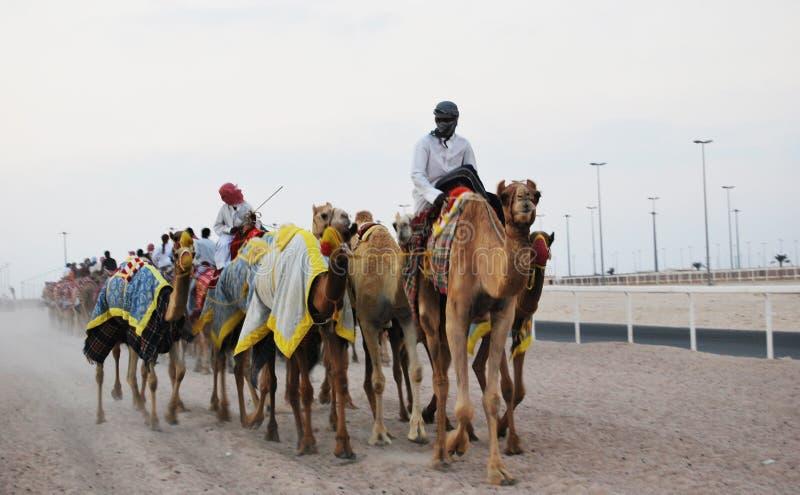 Kamelrennen, Doha, Katar lizenzfreies stockbild