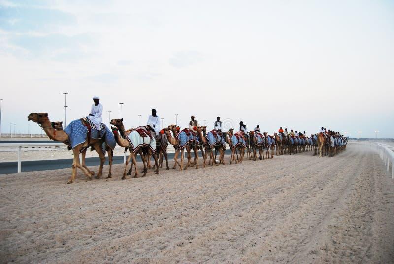 Kamelrennen, Doha, Katar lizenzfreie stockfotografie