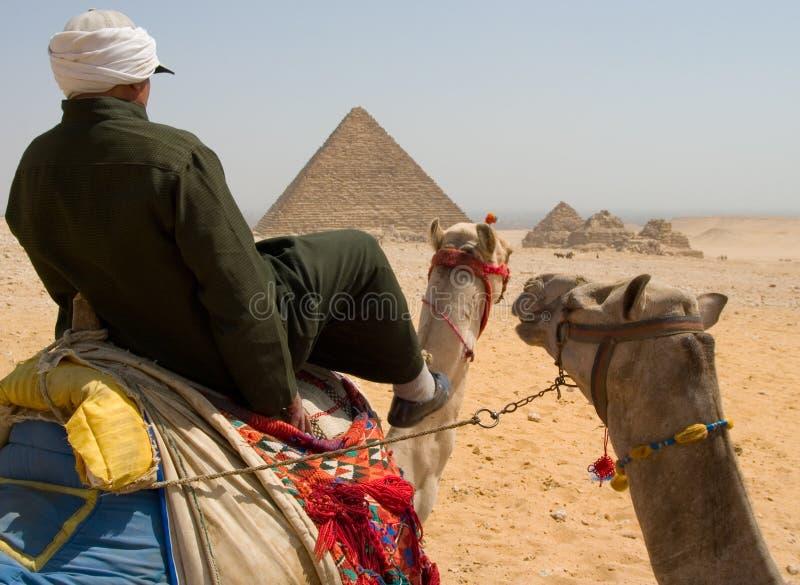 kamelryttare royaltyfria bilder