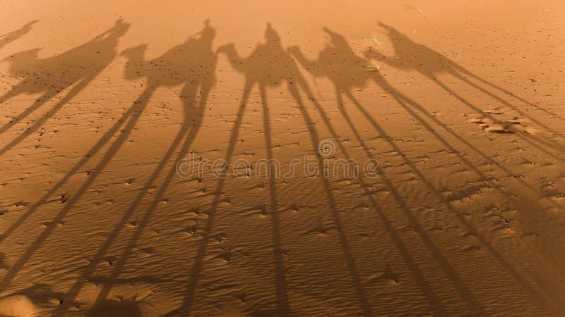kamelsahara skuggor arkivbild