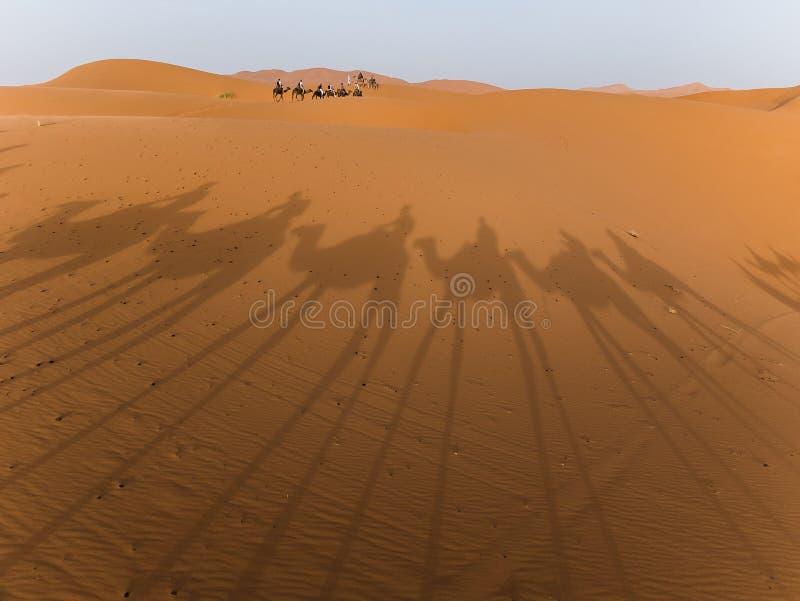kamelsahara skuggor royaltyfria foton