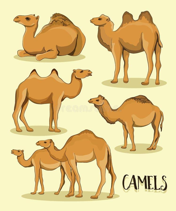 Kamelschattenbilder eingestellt vektor abbildung