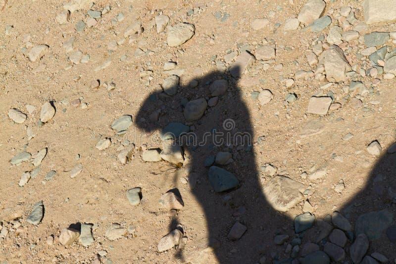 kamelskugga royaltyfri bild