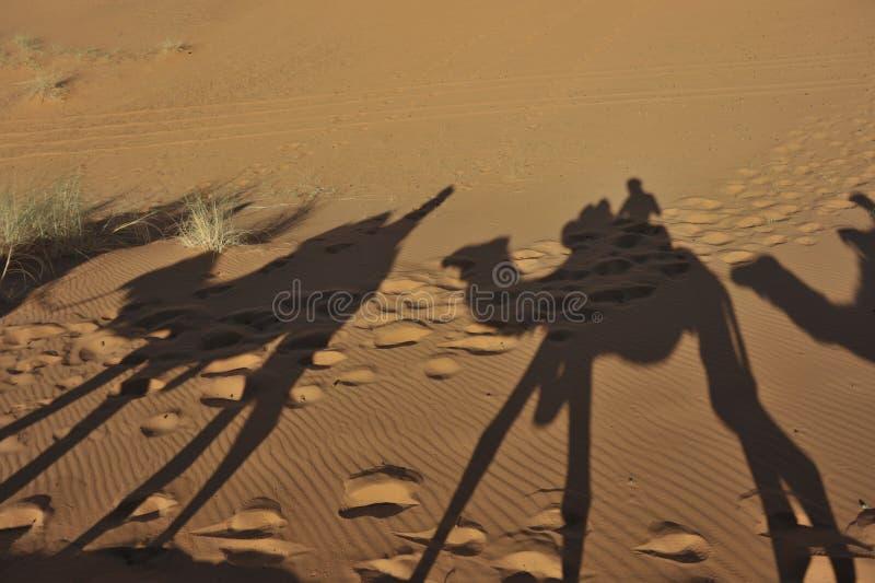 kamelskuggor fotografering för bildbyråer