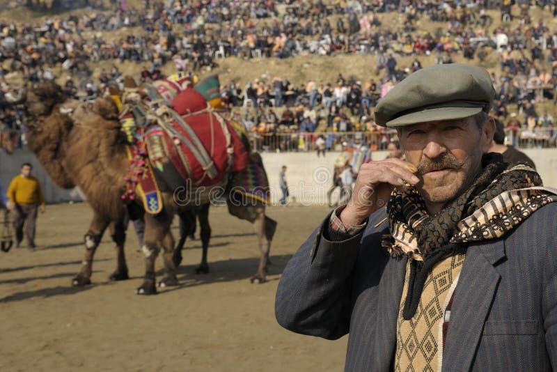 kamelslagsmål royaltyfria foton