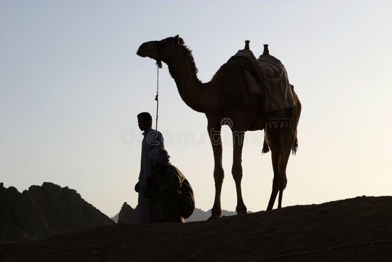 kamelsolnedgång arkivfoton