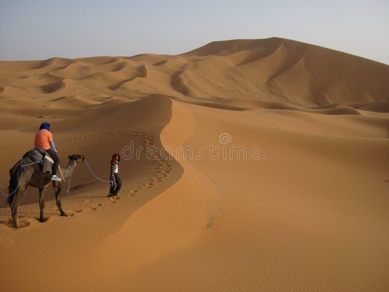 KamelTrek i den Sahara öknen royaltyfri bild