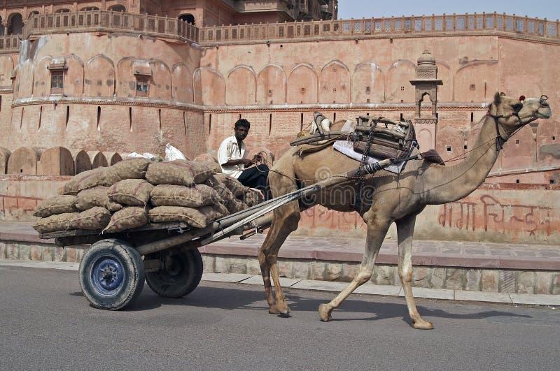 kamelvagn arkivfoton