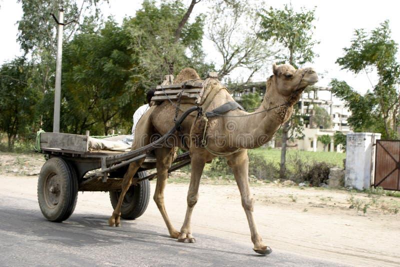 kamelvagn india jaipur royaltyfri bild