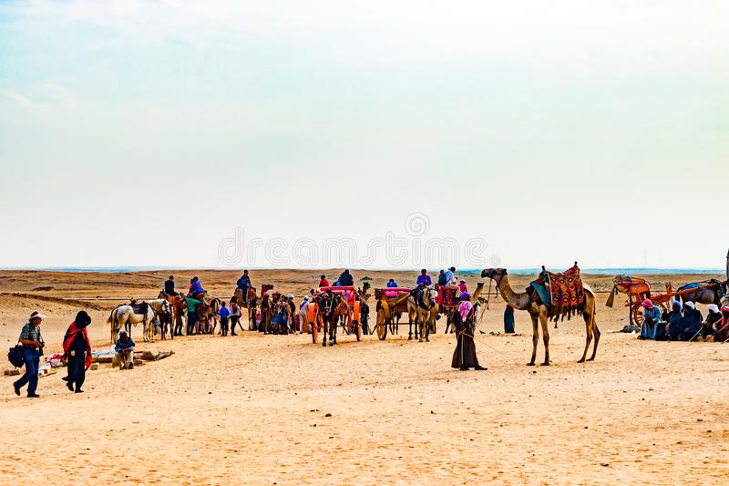 Kamelwohnwagen in Ägypten lizenzfreie stockfotos