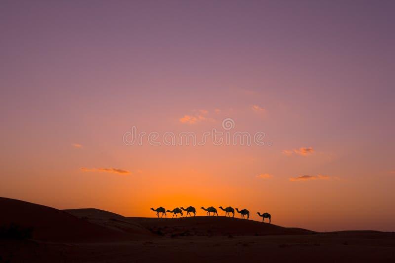 Kamelwohnwagen lizenzfreie stockfotos
