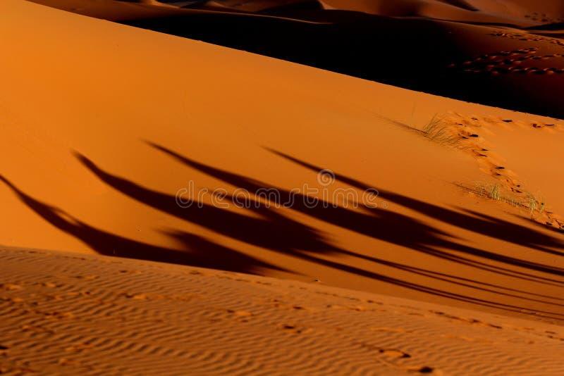 Kamelwohnwagen-Schattentrekking in der Sahara-Wüste lizenzfreies stockfoto
