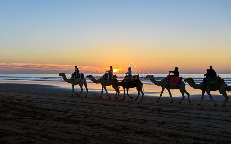Kamelwohnwagen am Strand bei Sonnenuntergang Essaouira lizenzfreie stockfotografie