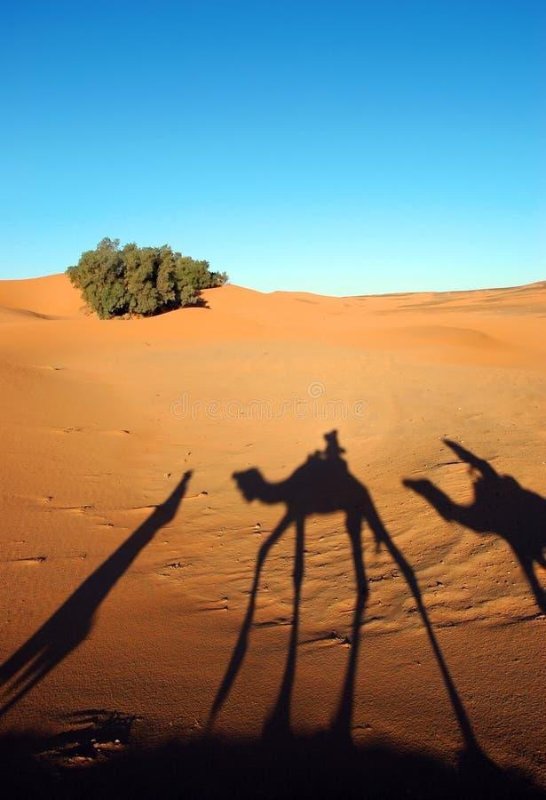 Kamelwohnwagenschatten lizenzfreies stockbild