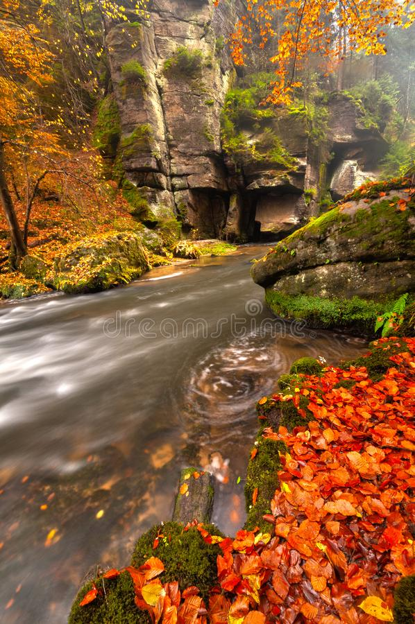 Kamenice river with autumn coloured trees during autumn. Kamenice river with autumn red coloured beech leaves during autumn at Bohemian Switzerland, Europe royalty free stock photos