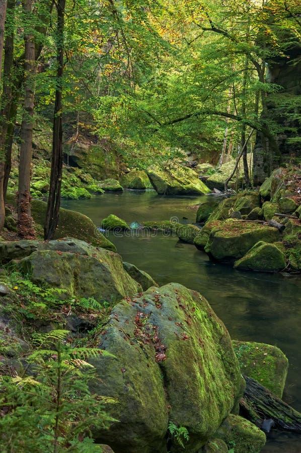 Kamenice river II royalty free stock photography