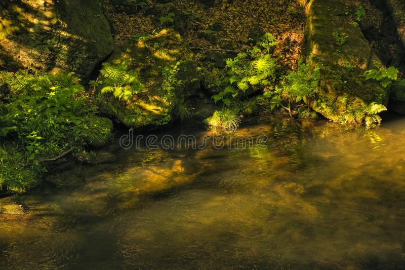 Kamenice river in Soutesky valley in National park Czech Switzerland near Hrensko village in spring sunset on 03rd June 2019 stock image