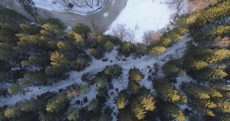 Kamera som ser rak down över vintergranskog i solnedgång arkivfoto