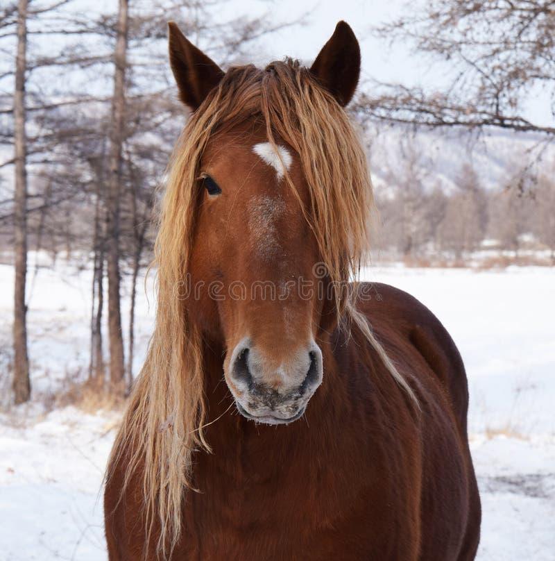 kamera szukać koni zdjęcie royalty free