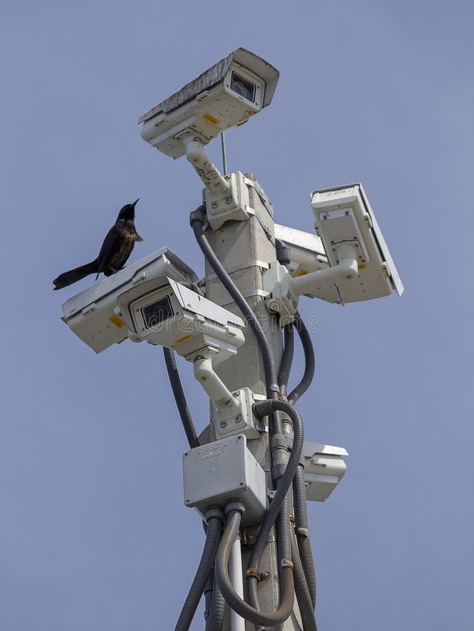 Kamery bezpieczeństwe przy Portowym Canaveral fotografia stock