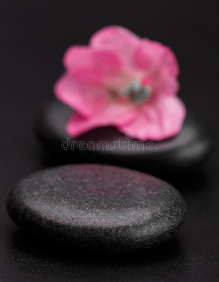 Kamień i płatek fotografia royalty free