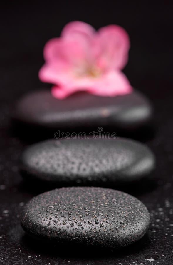 Kamień i płatek obrazy stock