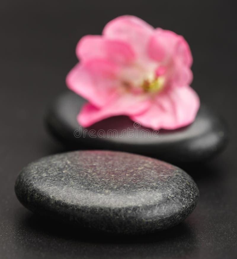 Kamień i płatek obrazy royalty free