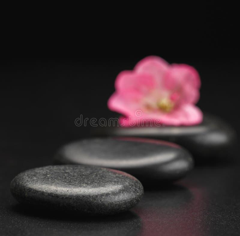 Kamień i płatek fotografia stock