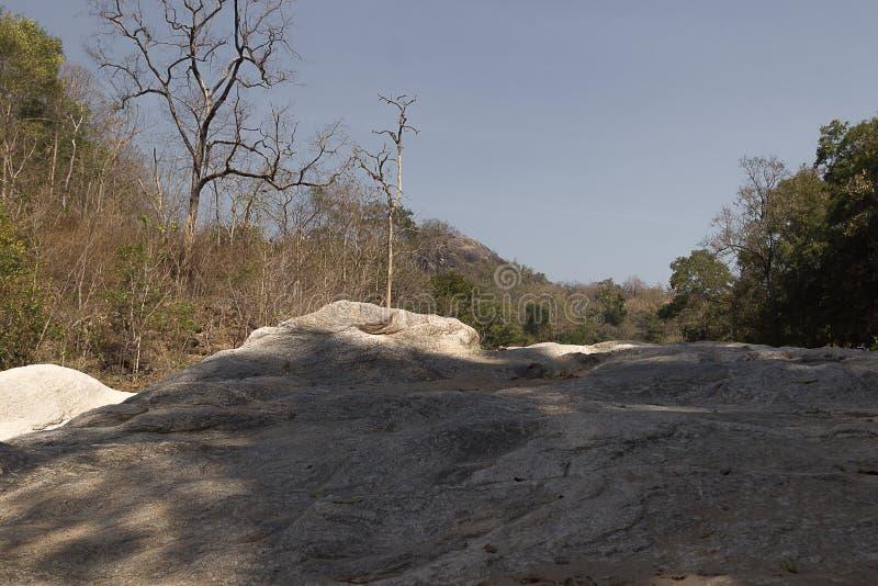 Kamień w lesie obrazy royalty free