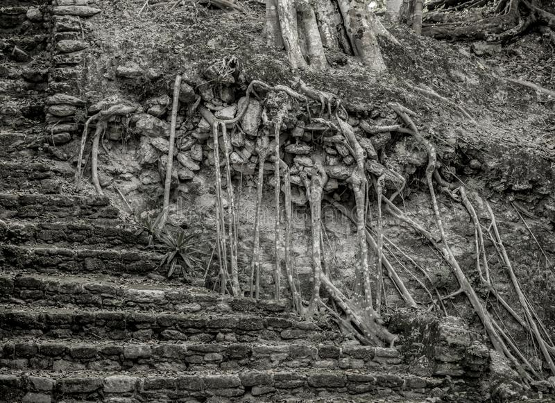 Kamieni kroki odzyskujący dżunglą w Dzibanche Majskich ruinach w Meksyk obraz royalty free