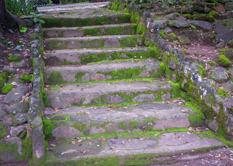 Kamieni kroki po monsunu zdjęcia stock