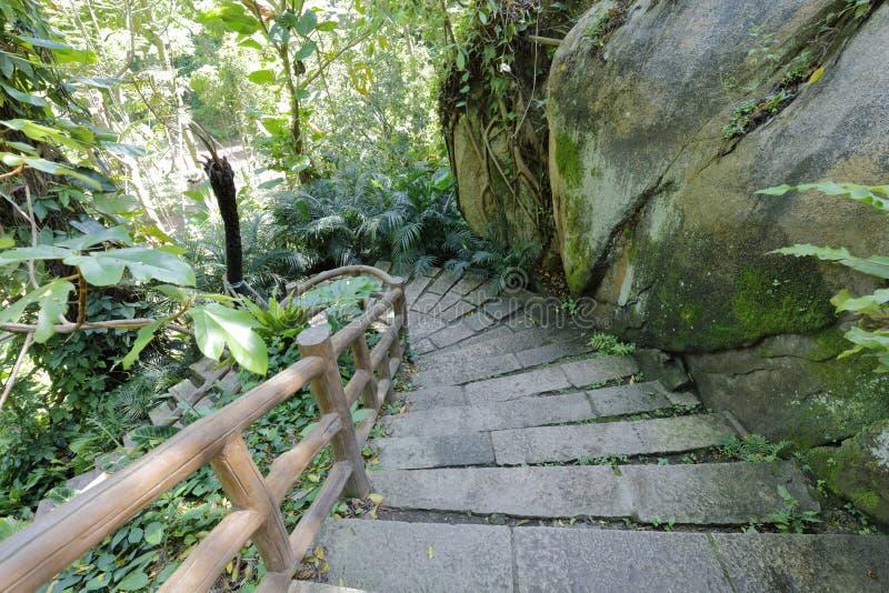 Kamieni kroki w dżungli, adobe rgb zdjęcie stock