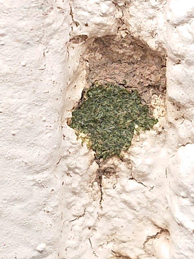 Kamieniarstwo pszczoły gniazdeczko obrazy royalty free